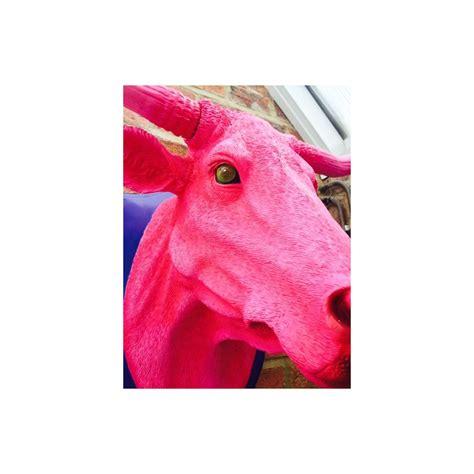 pink bulls ox head   hot pink wall art   find