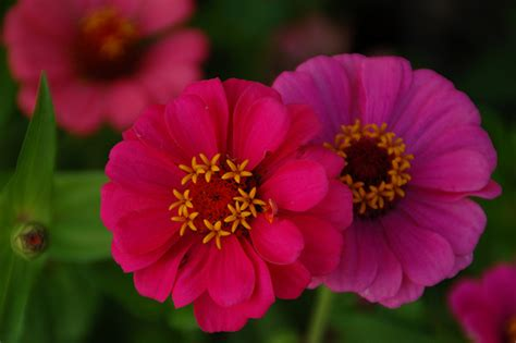 annual plant definition annual perennial and biennial flowers proflowers blog
