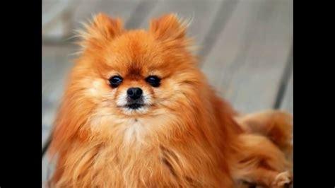 Teuerstes Parkticket Der Welt by Das Teuerste Hund Der Welt Top 10