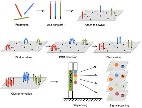 Illumina Sequencing by Service 3402 Bioinformatics