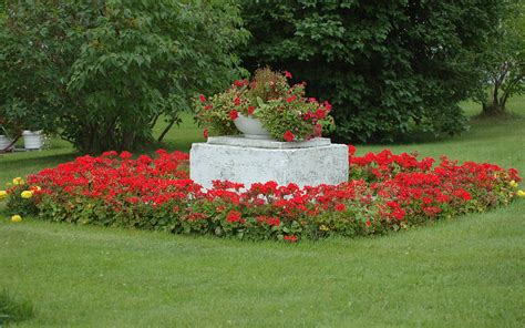 images flower garden flower garden backgrounds wallpaper cave