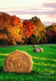 Blue Ridge Fall Colors