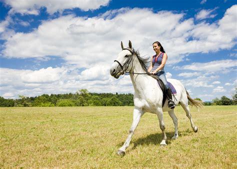 horses riding horseback animals zastavki intelligence artificial because