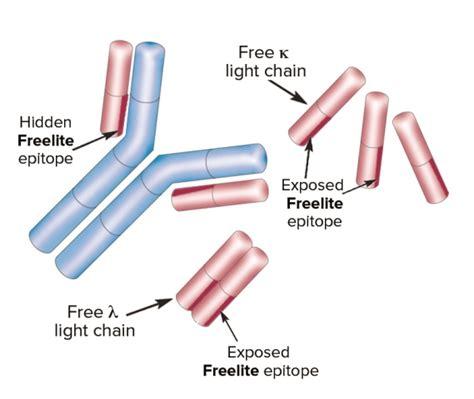 lambda free light chain binding site what is freelite