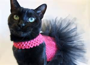 cat clothes cat tutu pink and black cat by