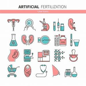Fetus Stock Vectors  Royalty Free Fetus Illustrations