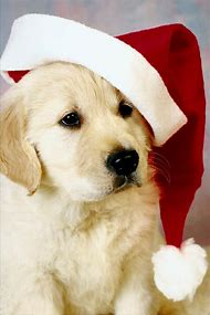 Cute Puppy Merry Christmas