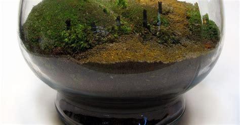 designing life lets play  dirt lets  terrarium