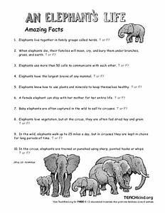 An Elephant U0026 39 S Life Worksheet For 3rd