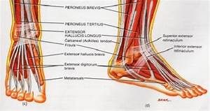 Knowing Ankle Diagram To Overcome Ankle Sprain