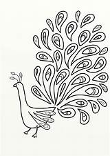 Feather Coloring Peacock Outline Pages Printables Adult Printable Printablee Via sketch template
