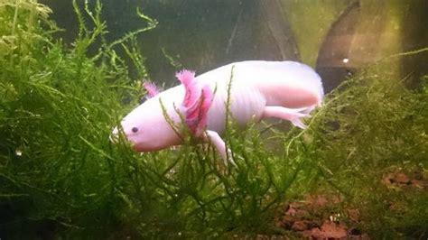 aquarium d ottrott les naades de beaux poissons foto di parc aquarium les naiades ottrott tripadvisor