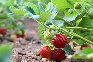Was Kann Man In Ein Gewächshaus Pflanzen : tomaten anziehen tomaten pflanzen aus samen selber ~ Articles-book.com Haus und Dekorationen