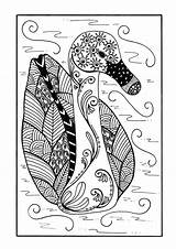 Coloring Duck Zentangle Pages Delicate Adult Colouring Pond Printable Favecrafts Detailed Sheets Colour Cat Birds Sheet Books sketch template