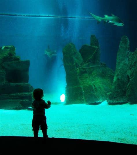 aquarium des deux oceans l aquarium de g 234 nes un plongeon dans tous les oc 233 ans du monde