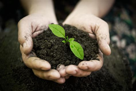 nutrition diva  soil based organisms beneficial