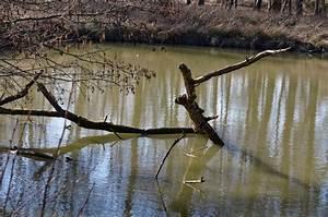 Un Saut D Eau : lac du saut du loup en zones humides la sauvetat du dropt ~ Dailycaller-alerts.com Idées de Décoration