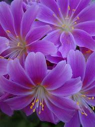 Purple Flower Names