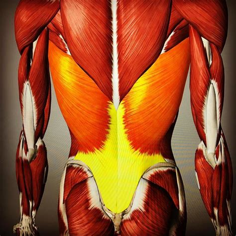 Tips For Lats - https://www.neumephysio.com