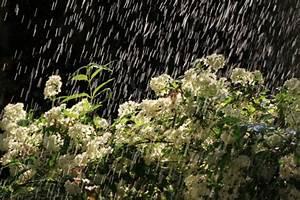 Welche Erde Für Hortensien : deutzie pflanzen pflegen vermehren und mehr ~ Eleganceandgraceweddings.com Haus und Dekorationen