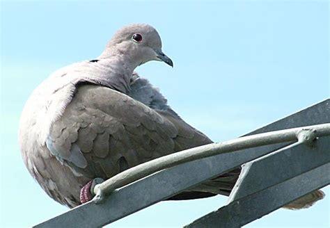 lancing nature gallery birds