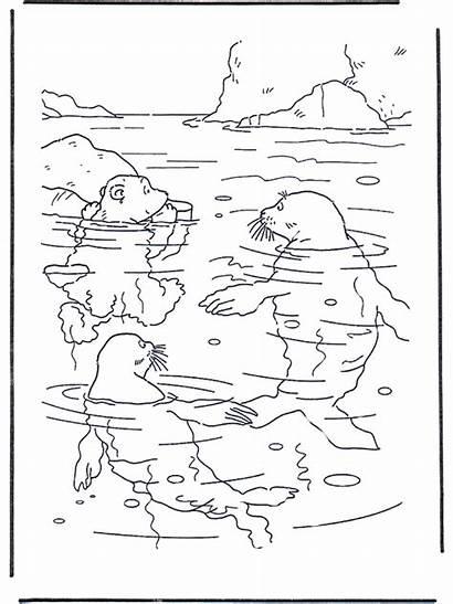 Polar Bear Coloring Pages Advertisement Printable Lars