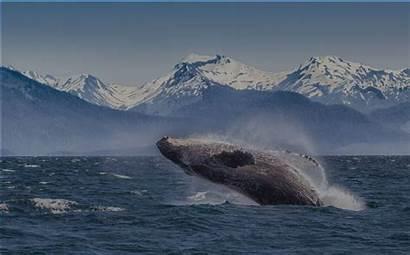 Alaska Celebrity Cruise Cruises Line