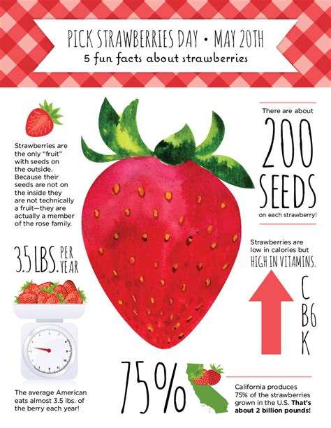 strawberry facts fun facts about strawberries for pick strawberries day la petite academy