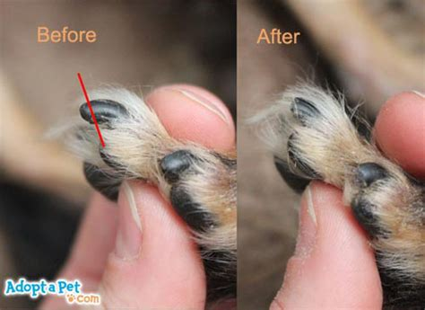 adopt  petcom blog   trim  dogs nails adopt