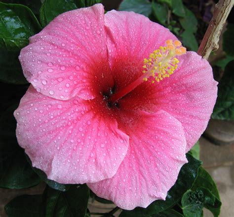 Tropical Flowering Plants By Orchidsplus
