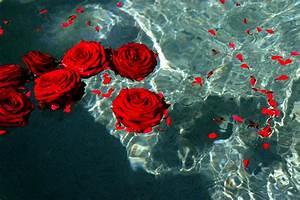 knumathise: Red Roses Tumblr Images