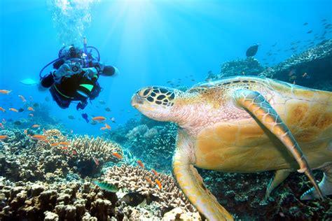 Dive Destinations 5 must dive destinations for 2016