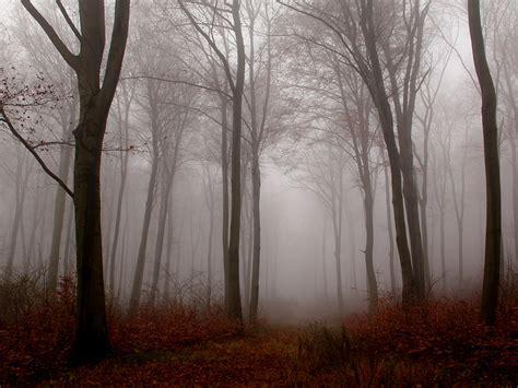nebel im november nebel im herbstwald 015 kostenloses hintergrundbild
