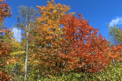 September Leaves | Boundary Waters Blog