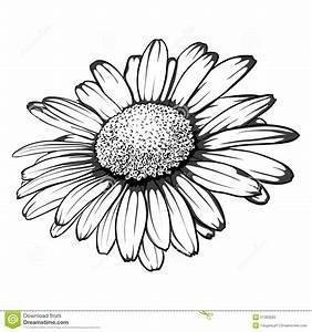 Beautiful Monochrome, Black And White Daisy Flower ...