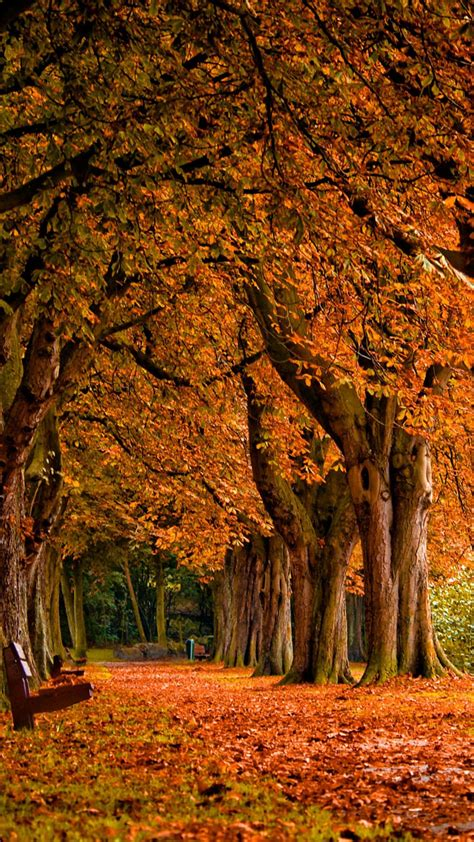 Android Hd Autumn Wallpapers by Road In Trees Best Hd Wallpapers For Iphone And