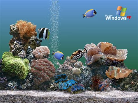 theme windows xp aquarium wallpapers w3 directory wallpapers