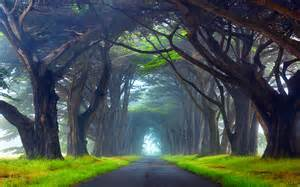 Oregon Christmas Trees Types by Nature Tunnel Of Trees Way Point Reyes National Seashore