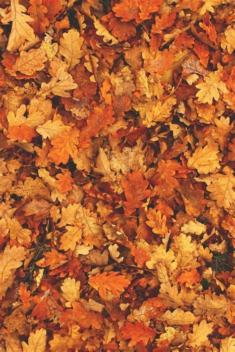 Aesthetic Fall Backgrounds Iphone by Fall Leaves Iphone 6 Plus Wallpaper Background Iphone