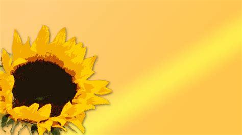 sun flower   backgrounds sun flower