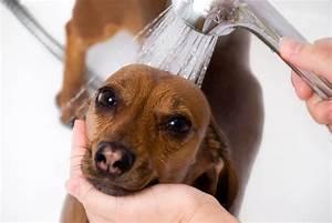Dog Grooming Combi INSTA 80 Watersave