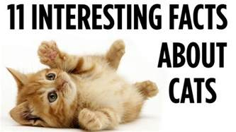 information about cats 11 interesting facts about cats