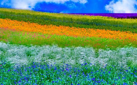 Primavera 4k Wallpapers by Fondos De Pantalla De Primavera Wallpapers Hd