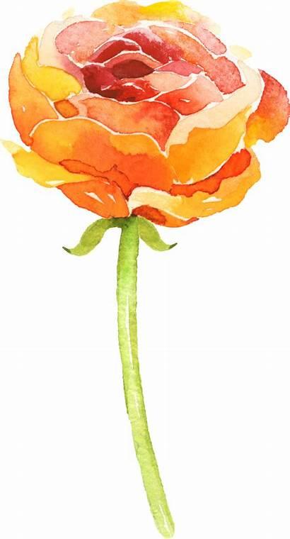 Watercolor Watercolour Easy Flowers Texture Tutorials Flower