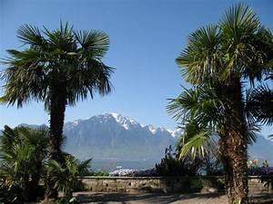 Bilder Von Palmen : palmen umrahmter blick von der seepromenade in montreux ber den genfer see auf den 2172 meter ~ Frokenaadalensverden.com Haus und Dekorationen