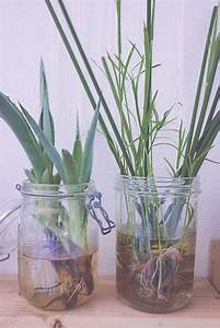 Bouture Plante Verte : bouturer des papyrus home green home jardins papyrus et jardinage ~ Melissatoandfro.com Idées de Décoration