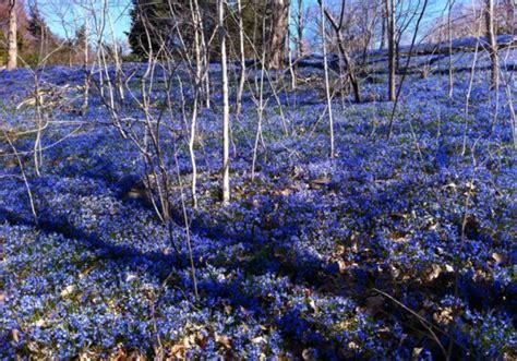 places   spring bloom  nyc inhabitat
