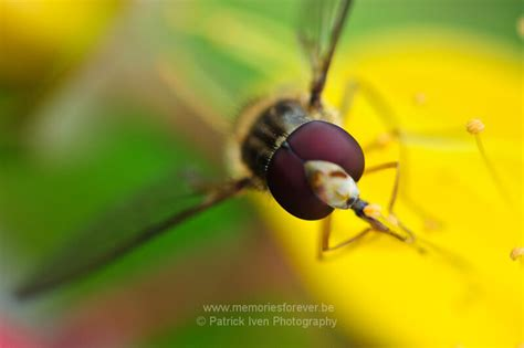 mind blowing examples  macro photography