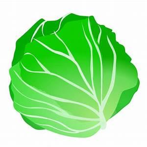 Lettuce clip art clipartall free clipart - Clipartix