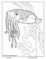 Coloring Ocean Pages Sea Cuttlefish Fish Adult Animals Animal Printable Seashore Adults Drawings Colouring Realistic Sheets Preschoolers Colorful Colouringpages Outline sketch template